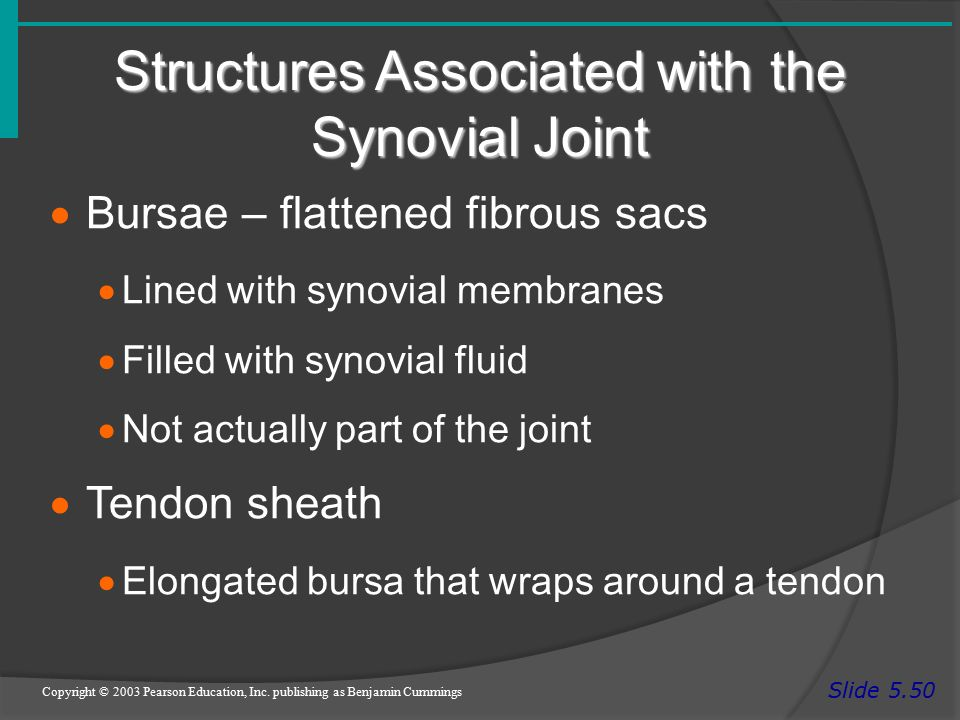 Structures Associated with the Synovial Joint Slide 5.50 Copyright © 2003 Pearson Education, Inc.