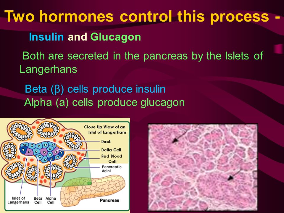 Two hormones control this process - Insulin and Glucagon Both are secreted in the pancreas by the Islets of Langerhans Beta (β) cells produce insulin Alpha (a) cells produce glucagon