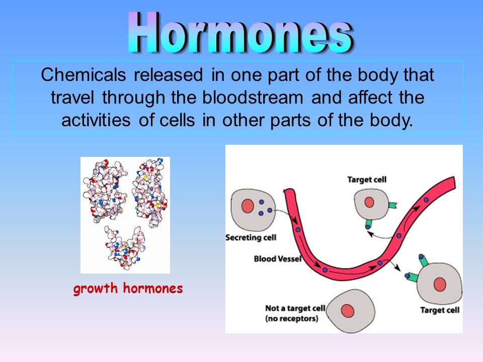 1.Endocrine glands: Release hormones DIRECTLY into the circulatory system 2.Hormones Consists of: