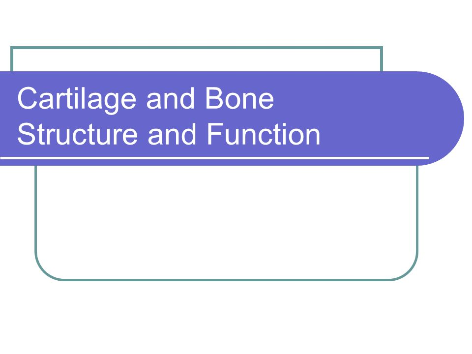 Cartilage and Bone Structure and Function