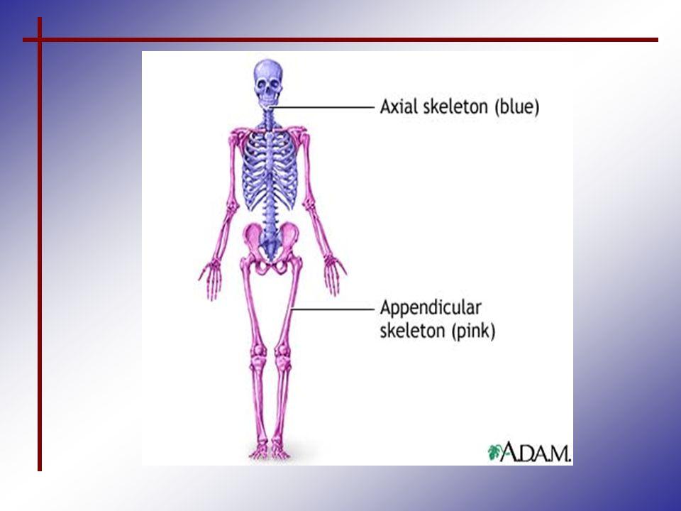 Fantástico Adam Anatomy And Physiology Imágenes - Anatomía de Las ...