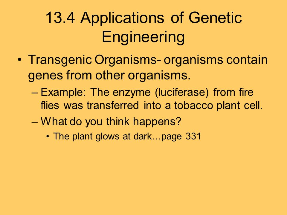 13.4 Applications of Genetic Engineering Transgenic Organisms- organisms contain genes from other organisms.