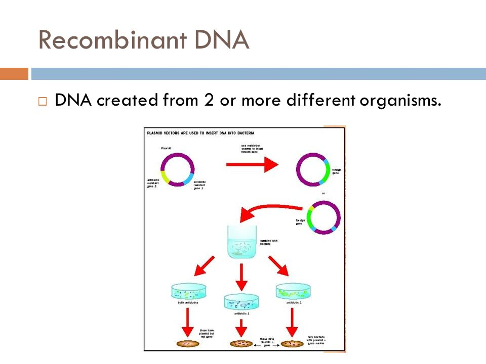 Recombinant DNA  DNA created from 2 or more different organisms.