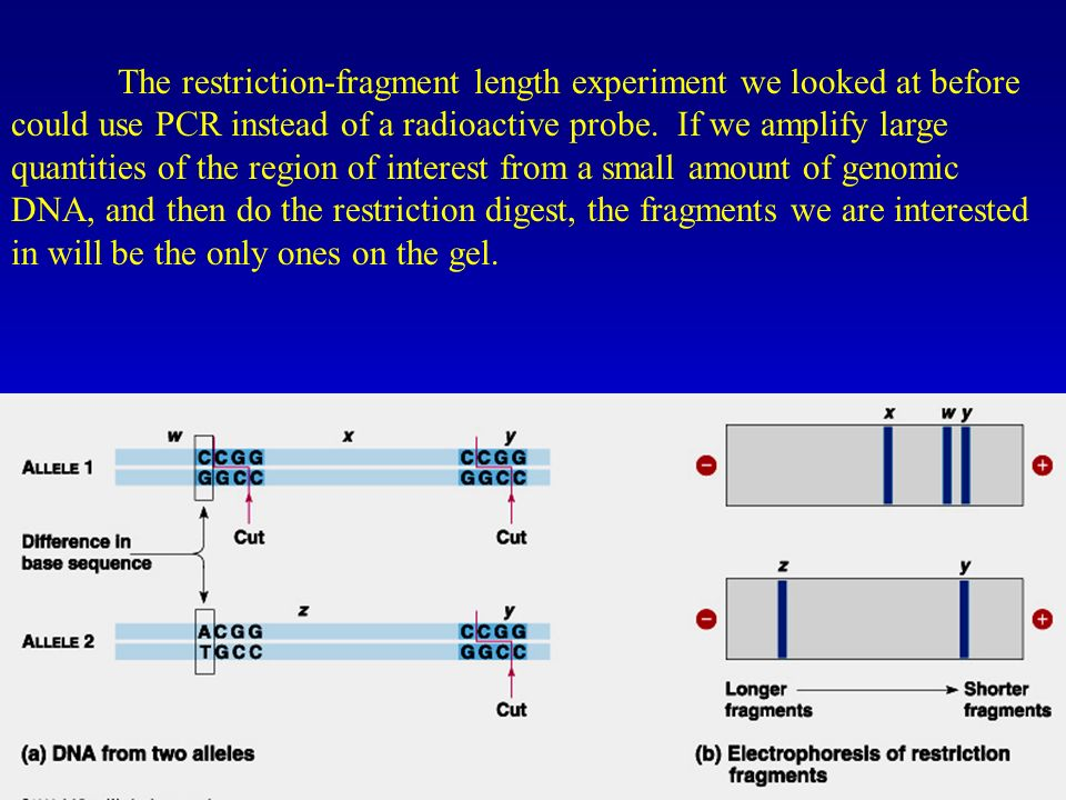 The restriction-fragment length experiment we looked at before could use PCR instead of a radioactive probe.