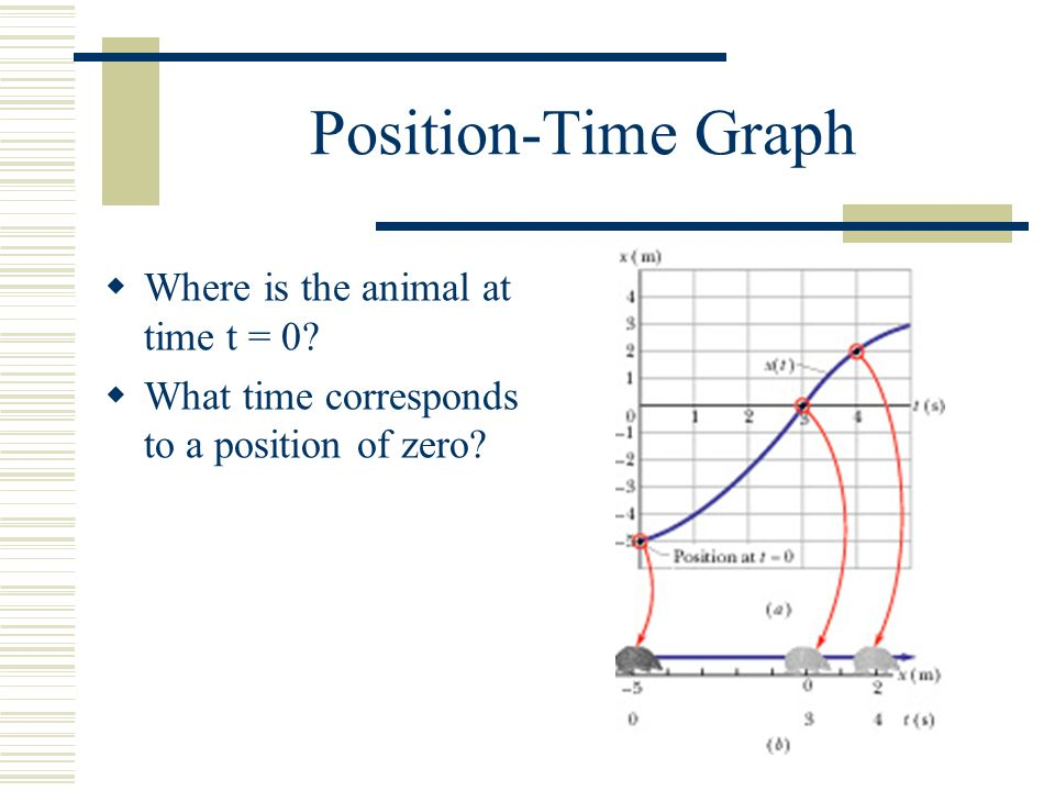 Position-Time Graph  Where is the animal at time t = 0.