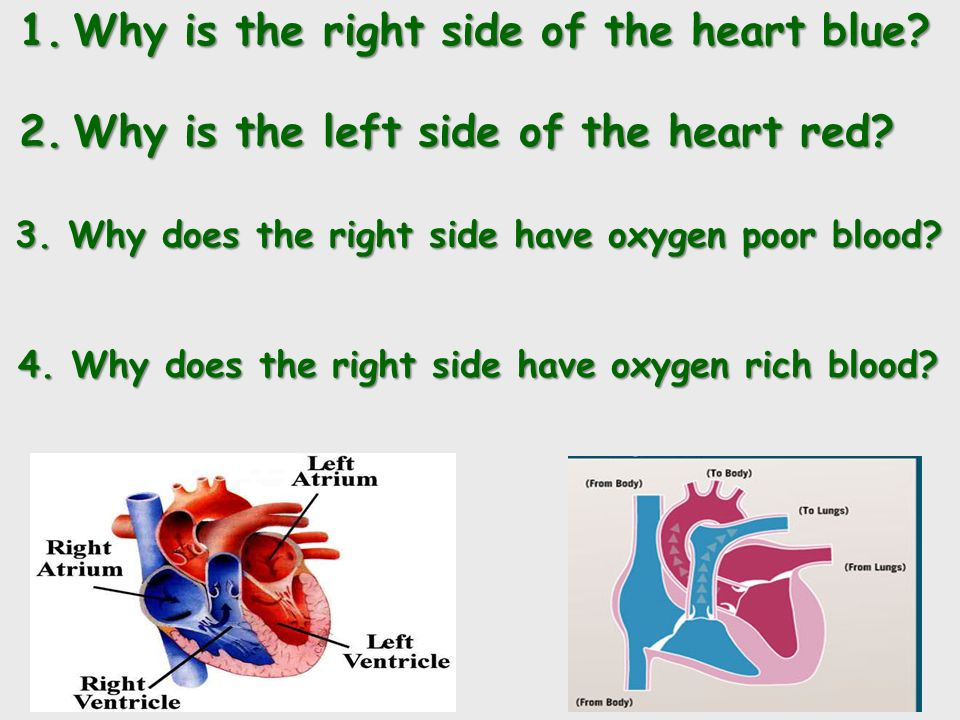 1.Why is the right side of the heart blue. 2.Why is the left side of the heart red.