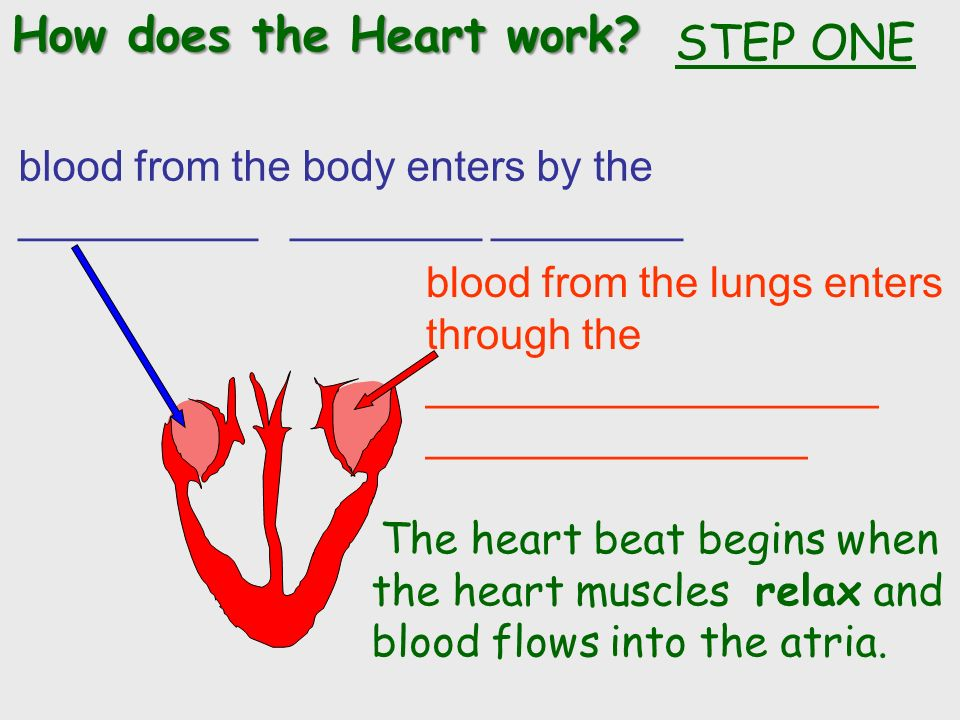 How does the Heart work.