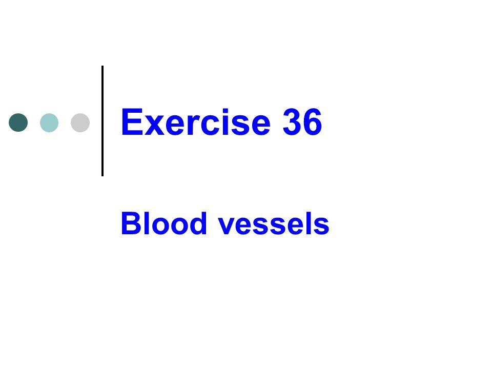 Exercise 36 Blood vessels