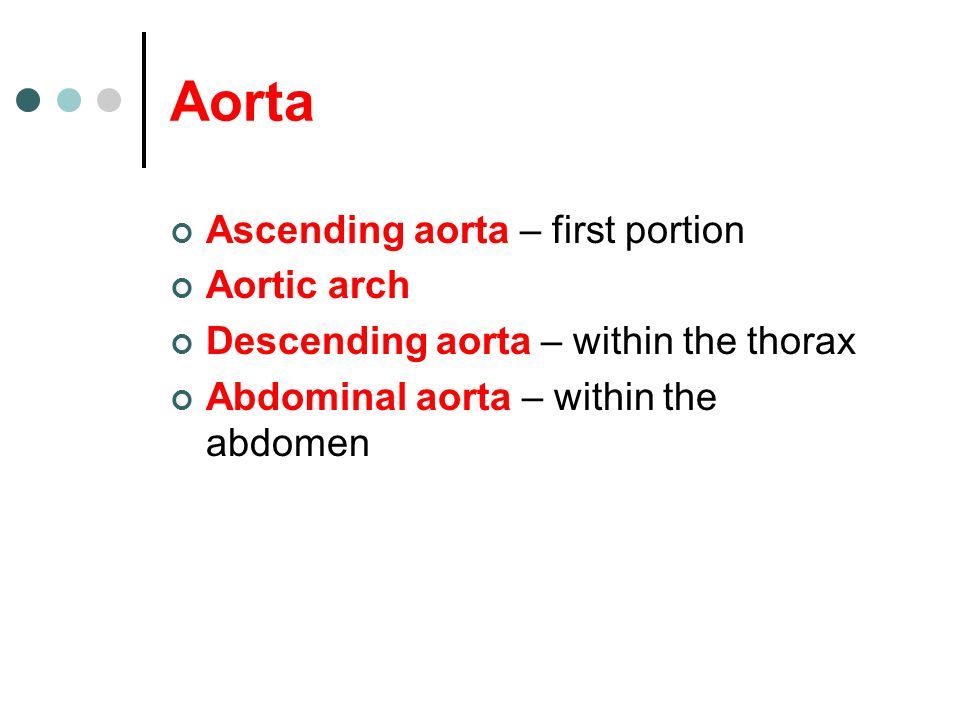 Aorta Ascending aorta – first portion Aortic arch Descending aorta – within the thorax Abdominal aorta – within the abdomen