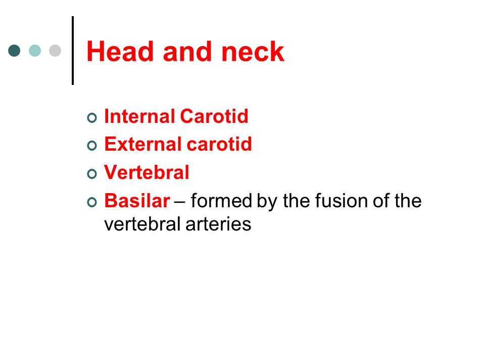 Head and neck Internal Carotid External carotid Vertebral Basilar – formed by the fusion of the vertebral arteries