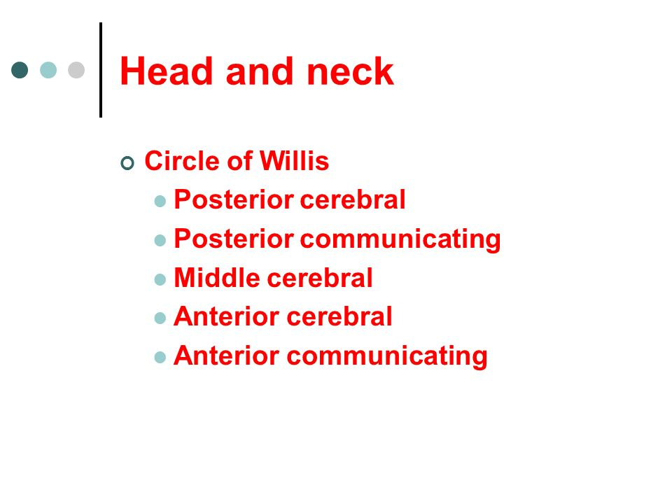 Circle of Willis Posterior cerebral Posterior communicating Middle cerebral Anterior cerebral Anterior communicating