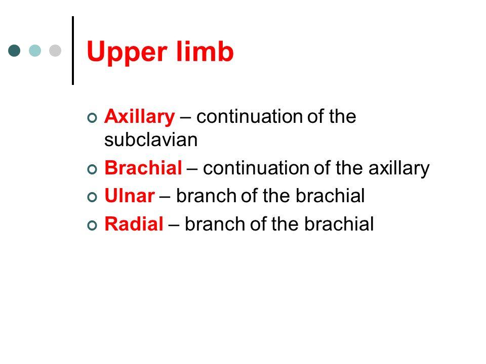 Upper limb Axillary – continuation of the subclavian Brachial – continuation of the axillary Ulnar – branch of the brachial Radial – branch of the bra