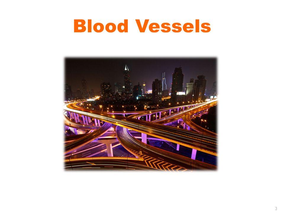 Blood Vessels 3