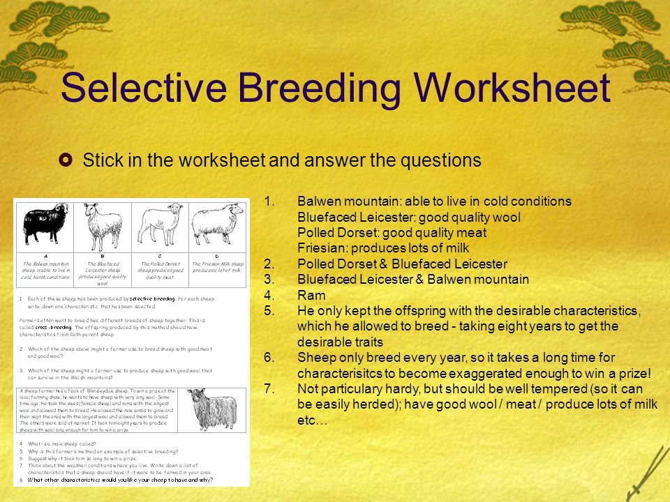 Selective Breeding D. Crowley, Selective Breeding  To understand ...