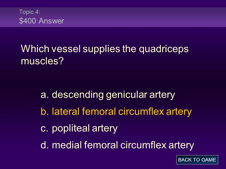 Topic 4: $400 Answer Which vessel supplies the quadriceps muscles.