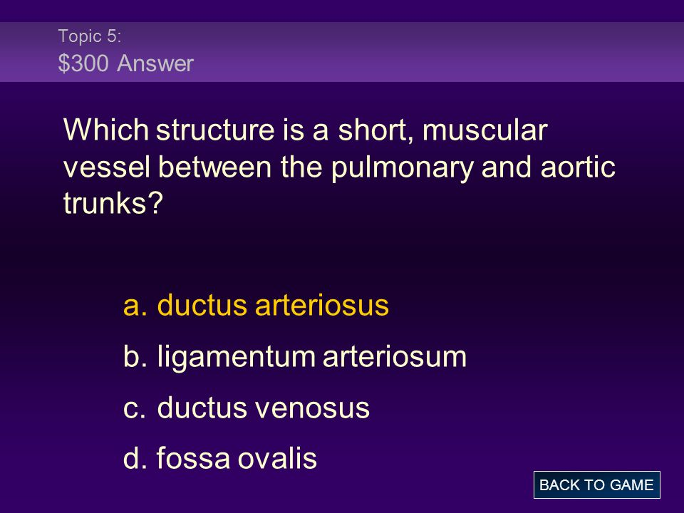 Topic 5: $300 Answer Which structure is a short, muscular vessel between the pulmonary and aortic trunks.