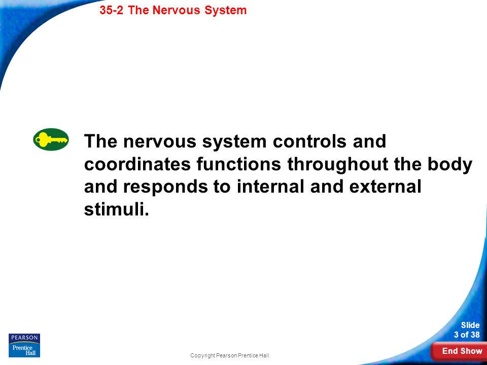 End Show 35-2 The Nervous System Slide 3 of 38 Copyright Pearson Prentice Hall 35-2 The Nervous System The nervous system controls and coordinates functions throughout the body and responds to internal and external stimuli.
