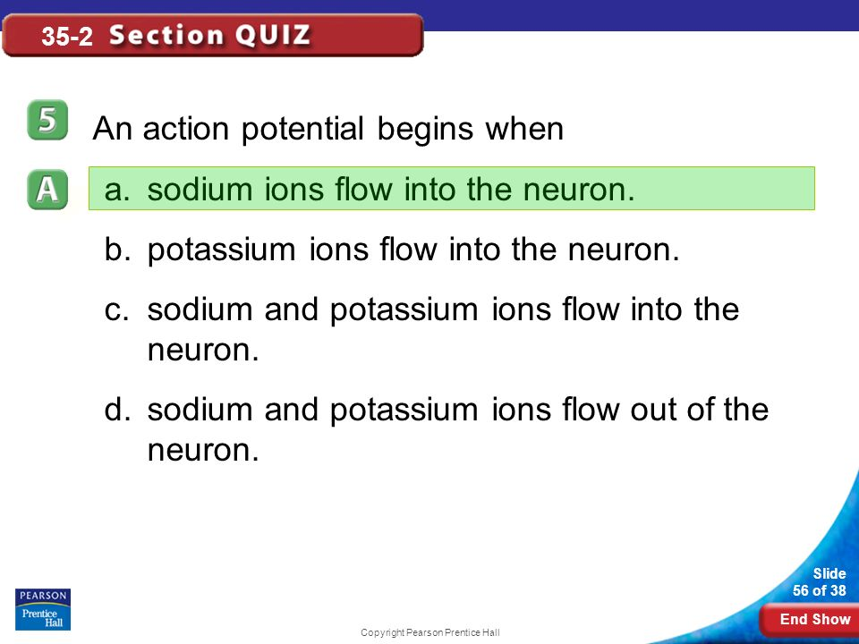 End Show Slide 56 of 38 Copyright Pearson Prentice Hall 35-2 An action potential begins when a.sodium ions flow into the neuron.
