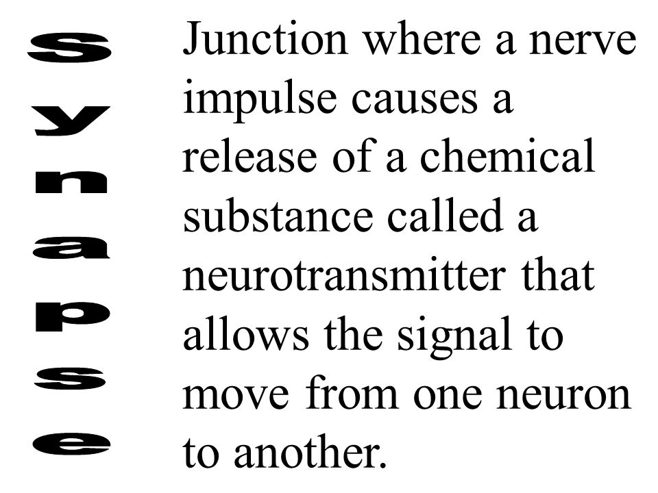 Junction where a nerve impulse causes a release of a chemical substance called a neurotransmitter that allows the signal to move from one neuron to another.