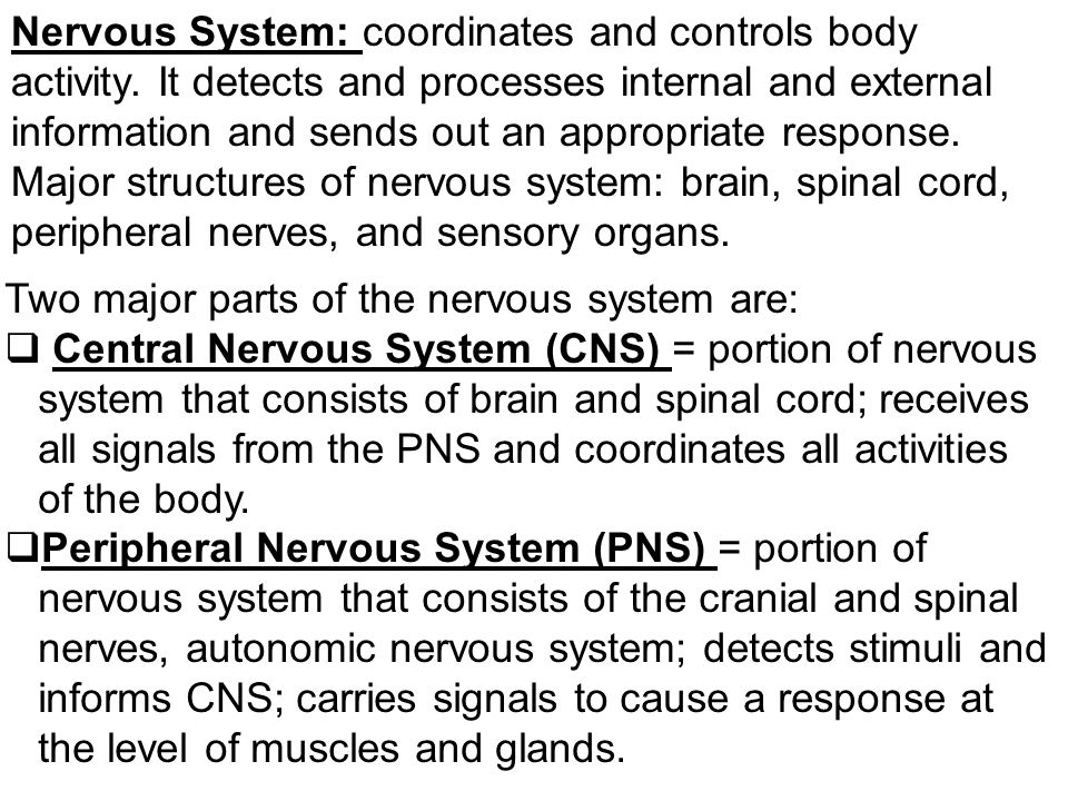 Nervous System: coordinates and controls body activity.