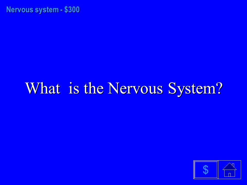 Nervous System - $200 What are the Automatic and Somatic systems $