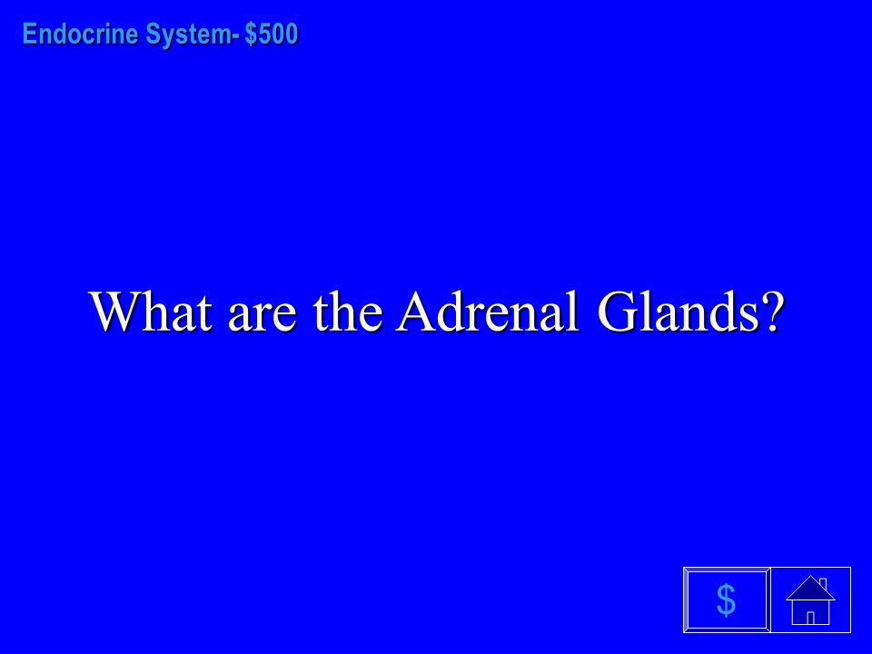 Endocrine System - $400 What is the Hypothalamus $