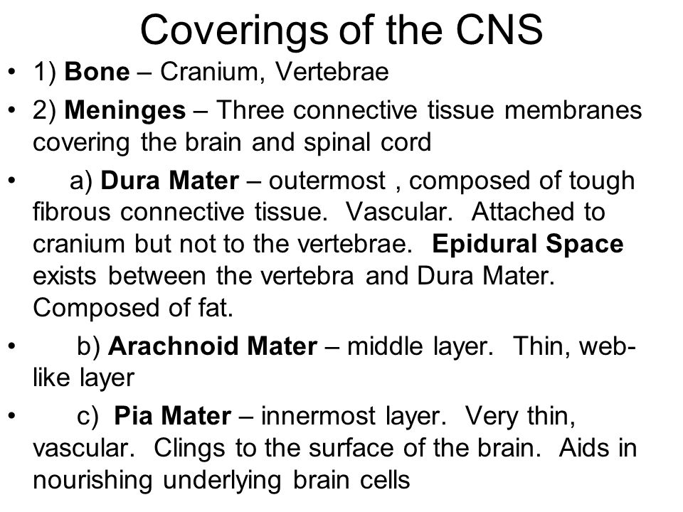 Coverings of the CNS 1) Bone – Cranium, Vertebrae 2) Meninges – Three connective tissue membranes covering the brain and spinal cord a) Dura Mater – outermost, composed of tough fibrous connective tissue.