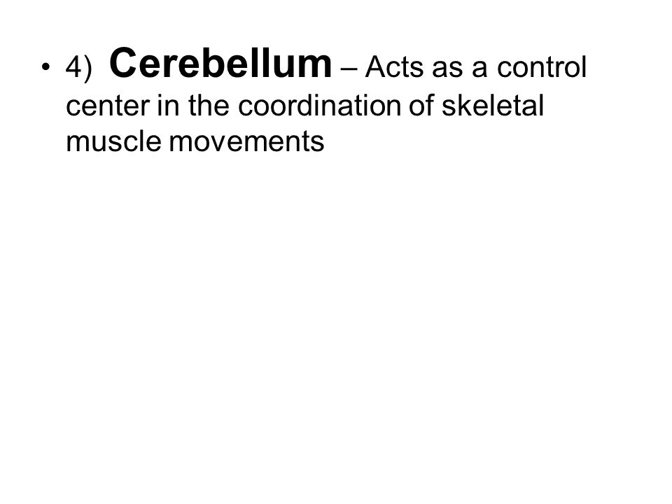 4) Cerebellum – Acts as a control center in the coordination of skeletal muscle movements