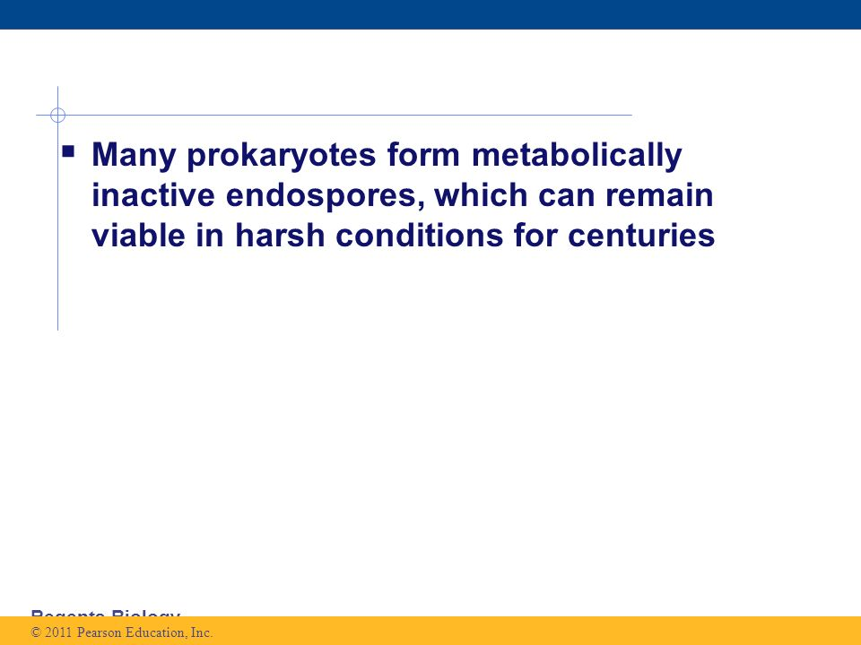 Regents Biology  Many prokaryotes form metabolically inactive endospores, which can remain viable in harsh conditions for centuries © 2011 Pearson Education, Inc.