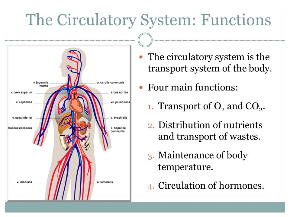 Control Of Cardiovascular Function Lessons Tes Teach