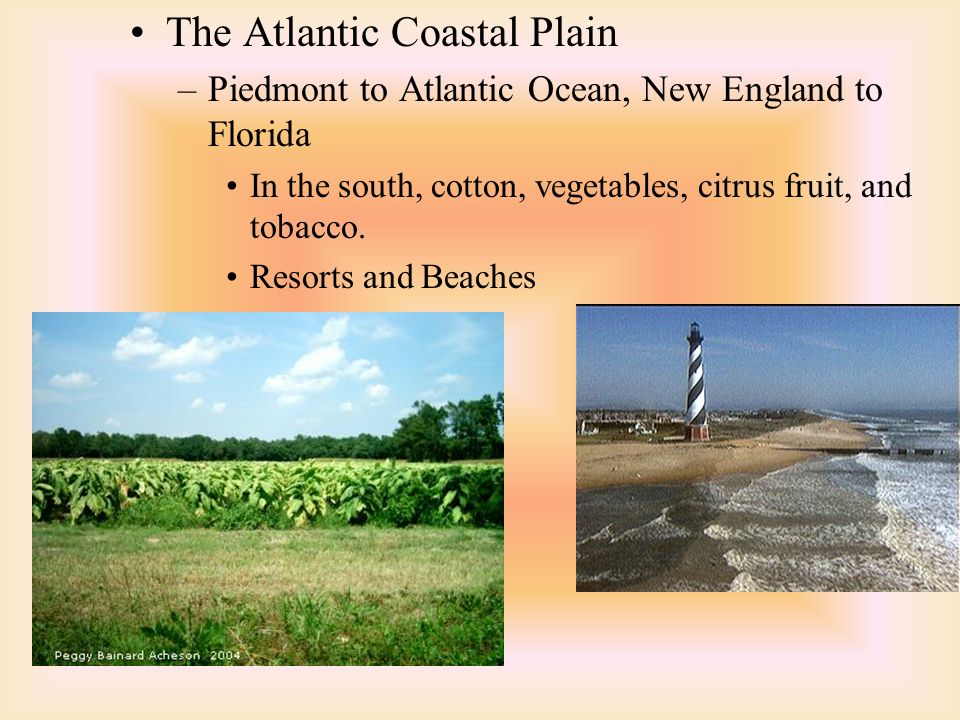 The Atlantic Coastal Plain –Piedmont to Atlantic Ocean, New England to Florida In the south, cotton, vegetables, citrus fruit, and tobacco.