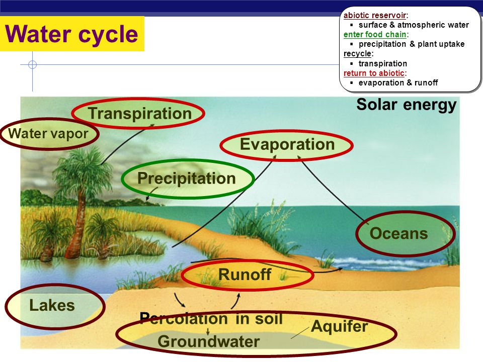 Phosphorus cycle Loss to deep sediment Rocks and minerals Soluble soil phosphate Plants and algae Plants Urine Land animals Precipitates Aquatic animals Animal tissue and feces Animal tissue and feces Decomposers (bacteria and fungi) Decomposers (bacteria & fungi) Phosphates in solution Loss in drainage abiotic reservoir:  rocks, minerals, soil enter food chain:  erosion releases soluble phosphate  uptake by plants recycle:  decomposing bacteria & fungi return to abiotic:  loss to ocean sediment abiotic reservoir:  rocks, minerals, soil enter food chain:  erosion releases soluble phosphate  uptake by plants recycle:  decomposing bacteria & fungi return to abiotic:  loss to ocean sediment