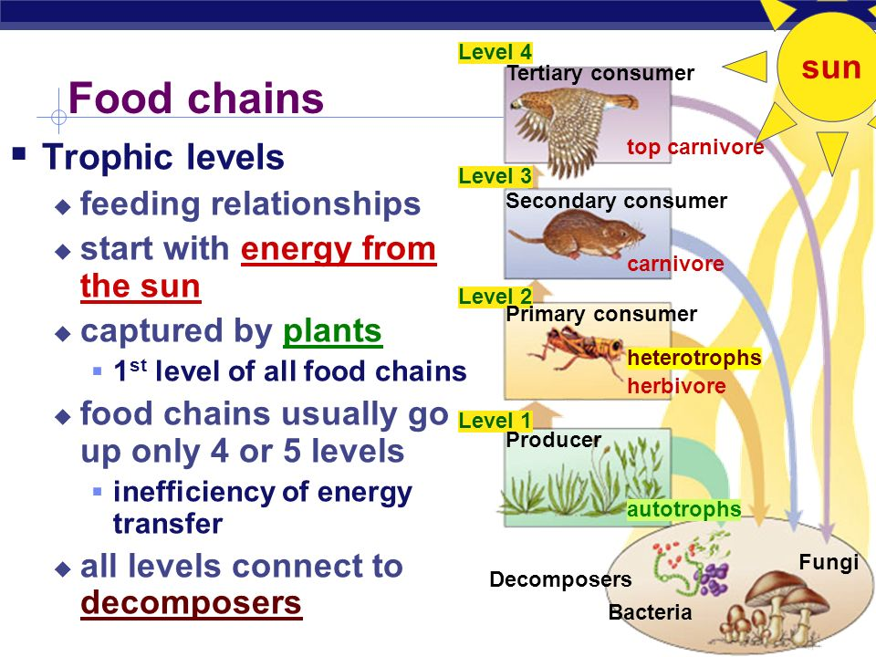Inefficiency of energy transfer  Loss of energy between levels of food chain  To where is the energy lost.