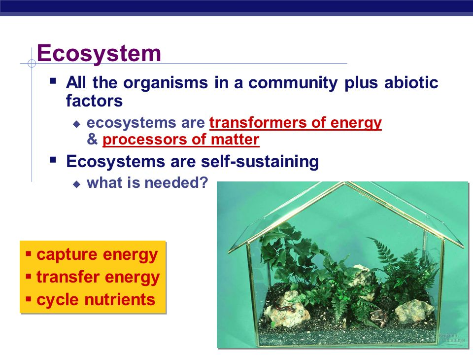 Essential Questions:  What limits the production in ecosystems.