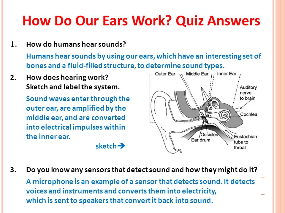 Worksheets The Ear Hearing And Balance Worksheet Answers the marvelous ear how do our ears work quiz 1 humans answers hear sounds