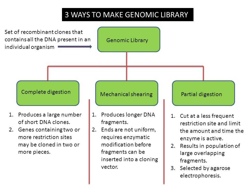 Genomic Library Complete digestion Mechanical shearingPartial digestion 1.Produces a large number of short DNA clones.