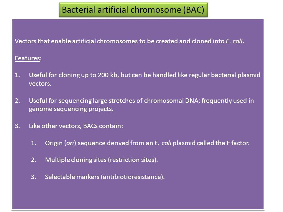 Vectors that enable artificial chromosomes to be created and cloned into E.