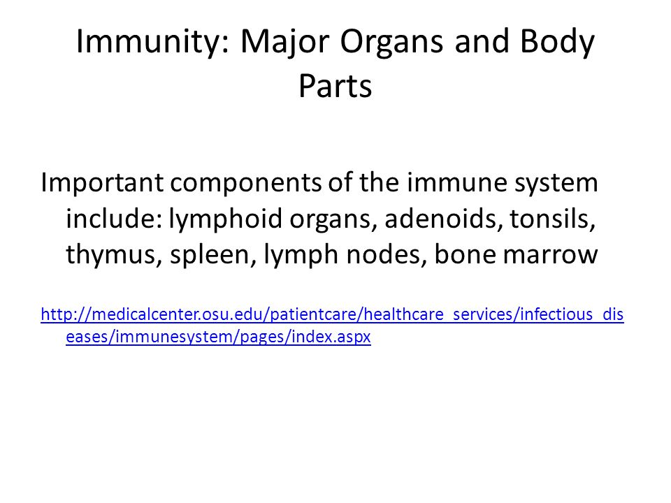 The Immune System Bryce Tappan Function Of The Immune System The