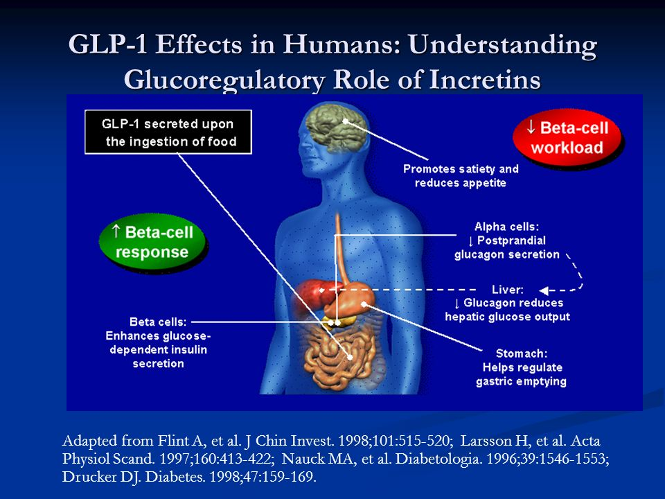 GLP-1 Effects in Humans: Understanding Glucoregulatory Role of Incretins Adapted from Flint A, et al. J Chin Invest. 1998;101:515-520; Larsson H, et a