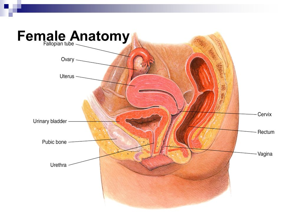 Female reproductive anatomy video 8712168 - follow4more.info