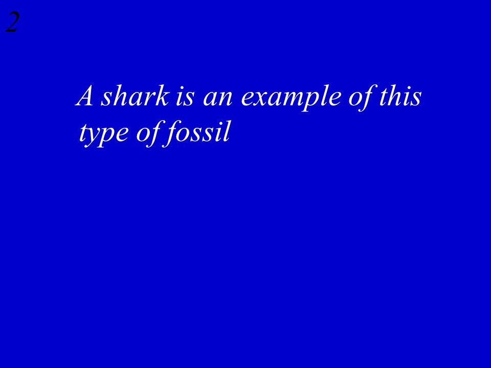 Evolution Jeopardy Fossil Record Comparative Anatomy Comparative
