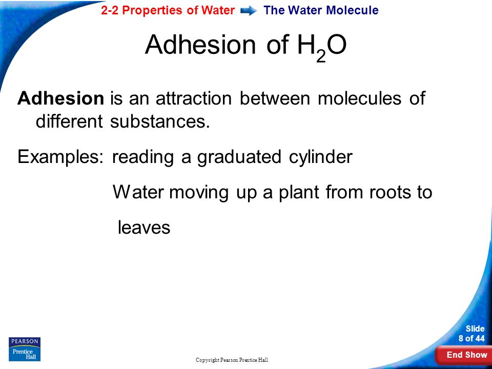 End Show 2-2 Properties of Water Slide 8 of 44 Copyright Pearson Prentice Hall The Water Molecule Adhesion is an attraction between molecules of different substances.