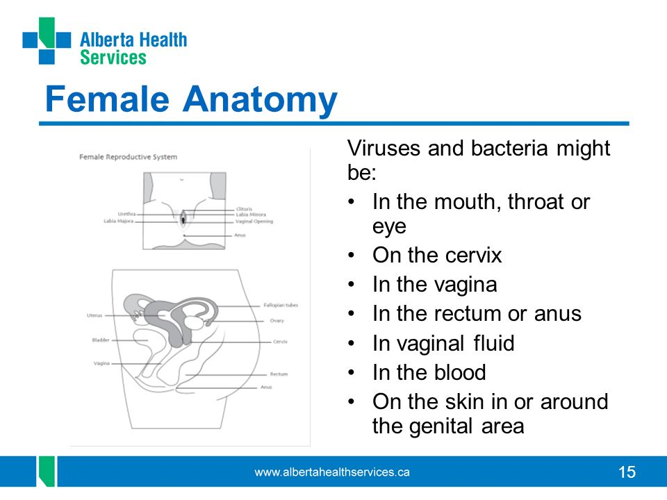 15 Female Anatomy Viruses and bacteria might be: In the mouth, throat or eye On the cervix In the vagina In the rectum or anus In vaginal fluid In the blood On the skin in or around the genital area