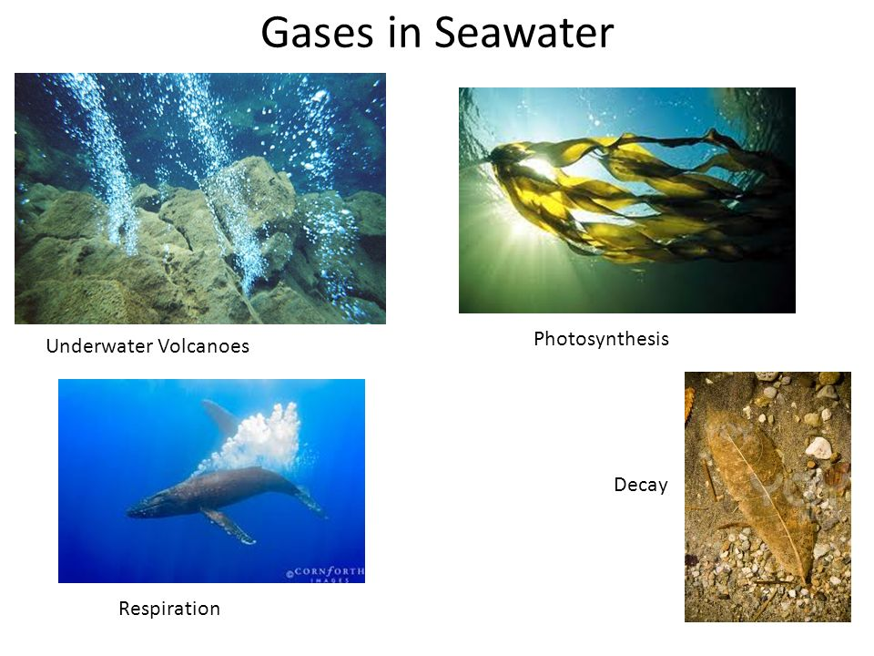 Gases in Seawater Underwater Volcanoes Photosynthesis Respiration Decay