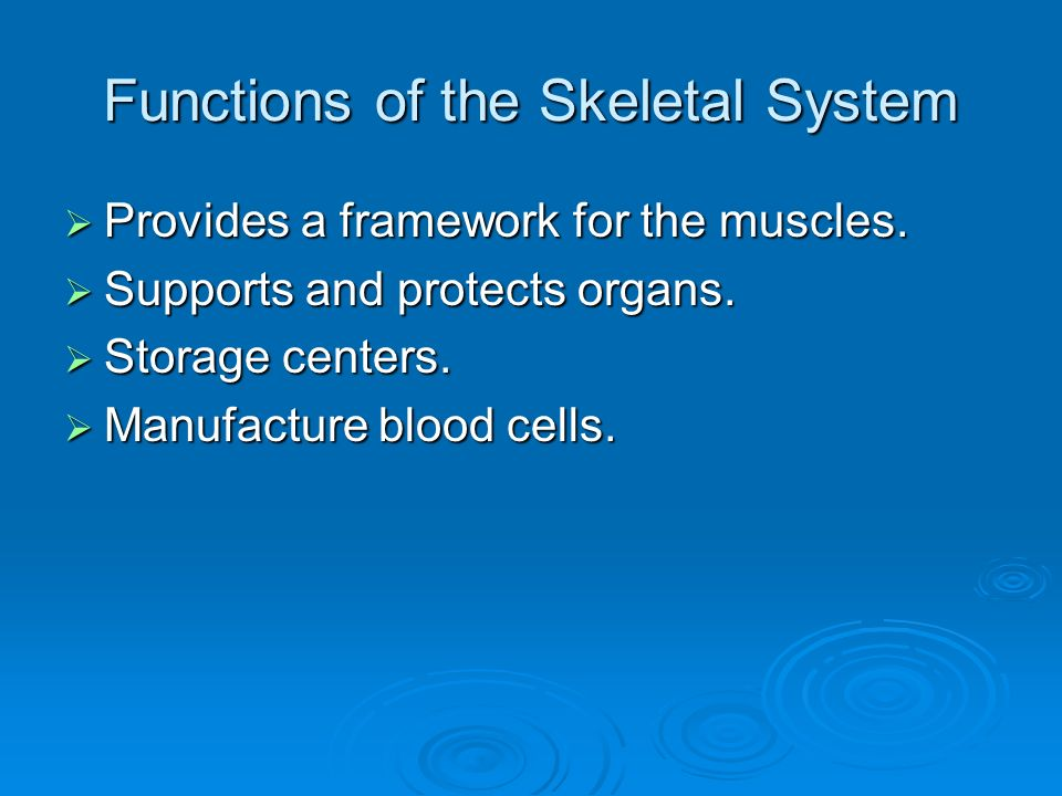 Functions of the Skeletal System  Provides a framework for the muscles.