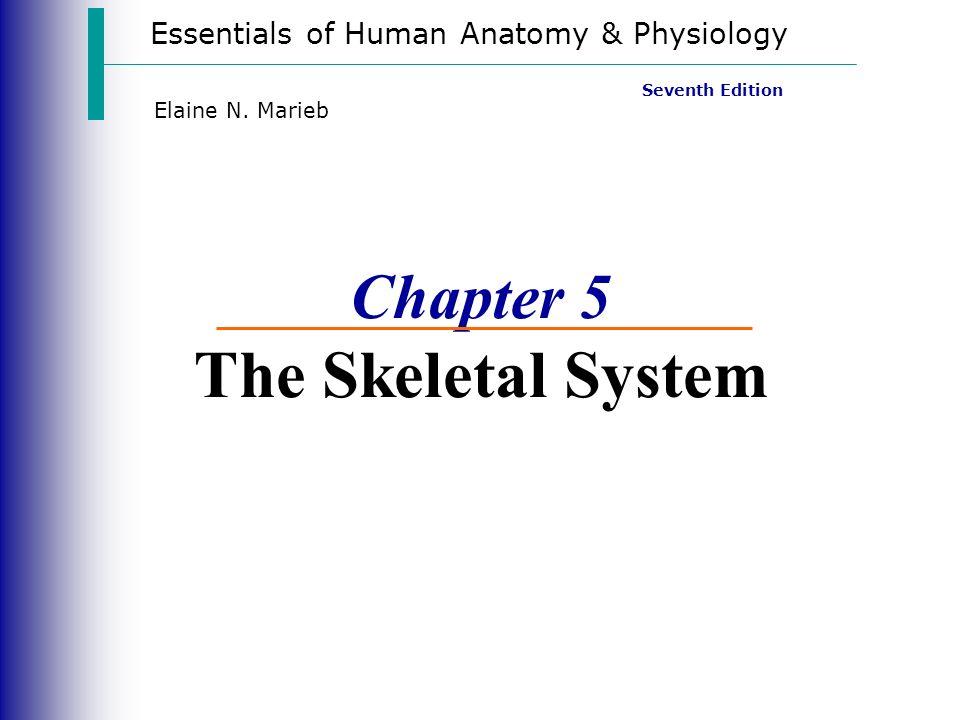 the skeletal system essay