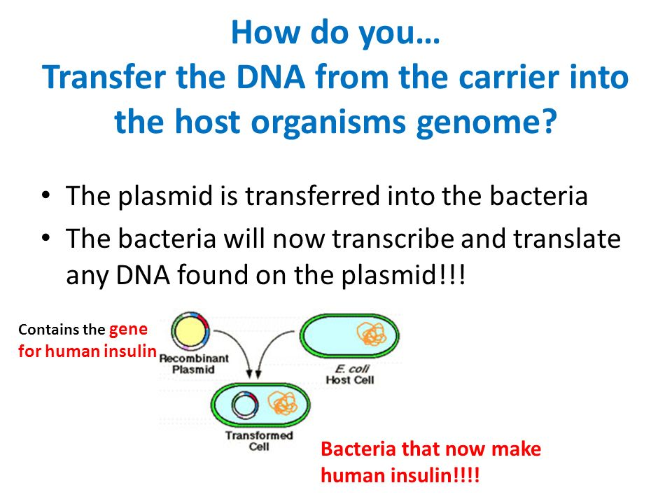How do you… Transfer the DNA from the carrier into the host organisms genome.