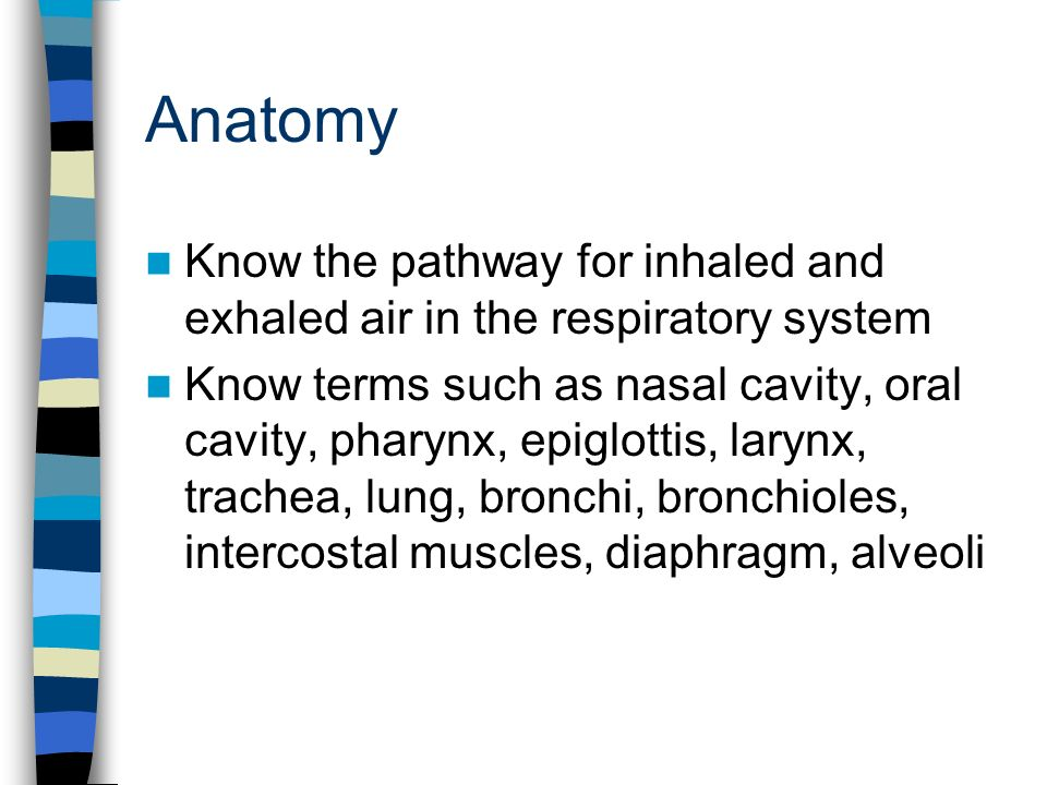 Anatomy Know the pathway for inhaled and exhaled air in the respiratory system Know terms such as nasal cavity, oral cavity, pharynx, epiglottis, larynx, trachea, lung, bronchi, bronchioles, intercostal muscles, diaphragm, alveoli