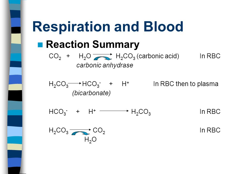 Respiration and Blood Reaction Summary CO 2 + H 2 O H 2 CO 3 (carbonic acid)In RBC carbonic anhydrase H 2 CO 3 HCO H + In RBC then to plasma (bicarbonate) HCO H + H 2 CO 3 In RBC H 2 CO 3 CO 2 In RBC H 2 O