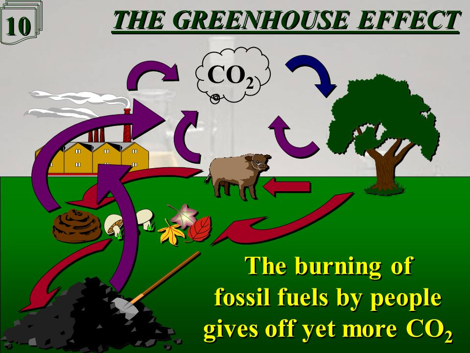 9 9 THE GREENHOUSE EFFECT CO 2 Fossil fuels are formed from dead animals & plants that do not decay quickly Fossil fuels are formed from dead animals & plants that do not decay quickly